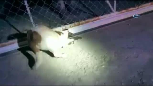 Kafası kapıya sıkışan köpeği itfaiye kurtardı