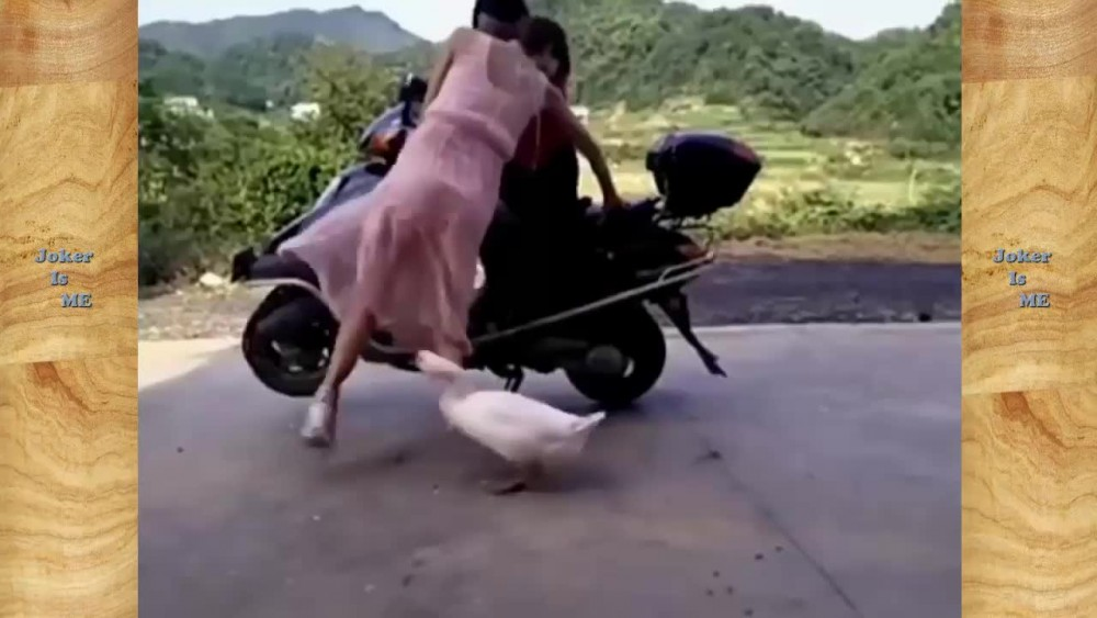 Best-funny-videos-2017