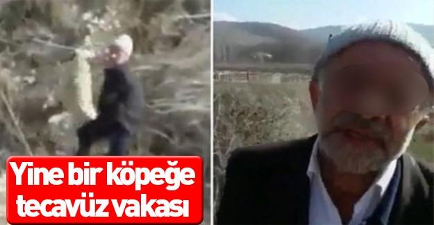 Köpeğe tecavüz eden şerefsiz - Video izle